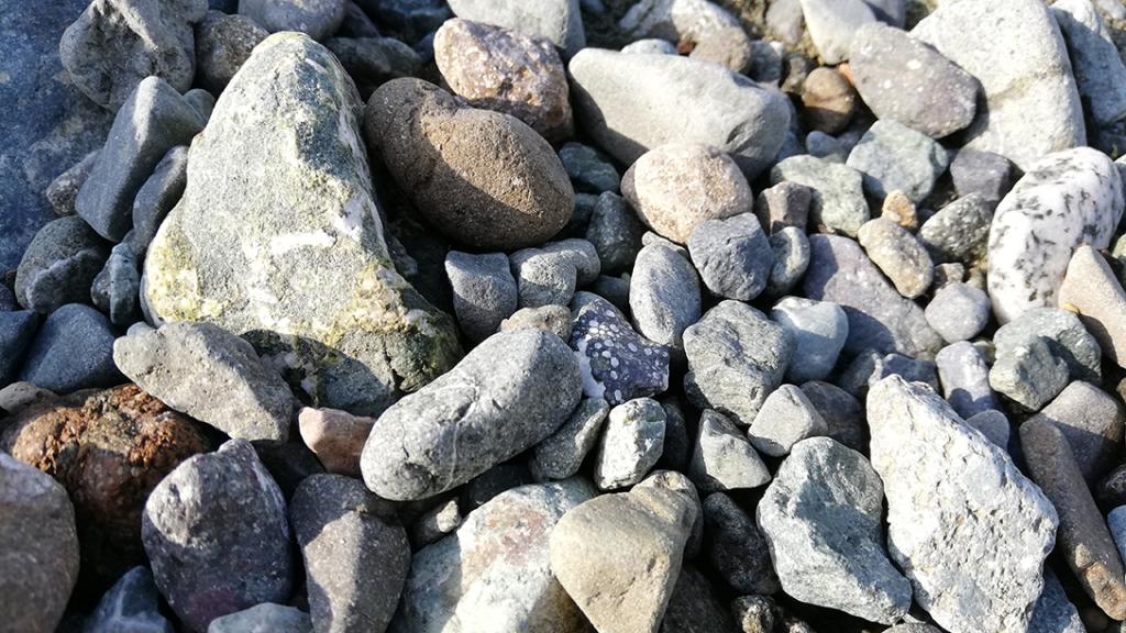 酒匂川の石たち
