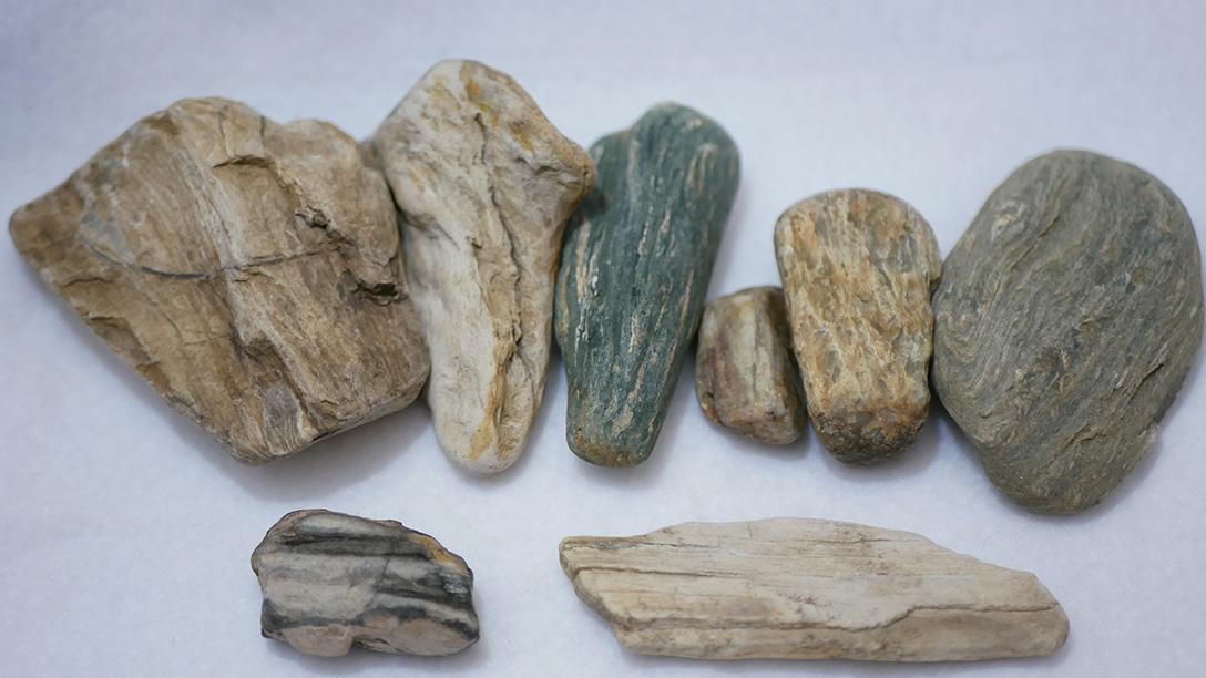珪化木と珪化木らしき石