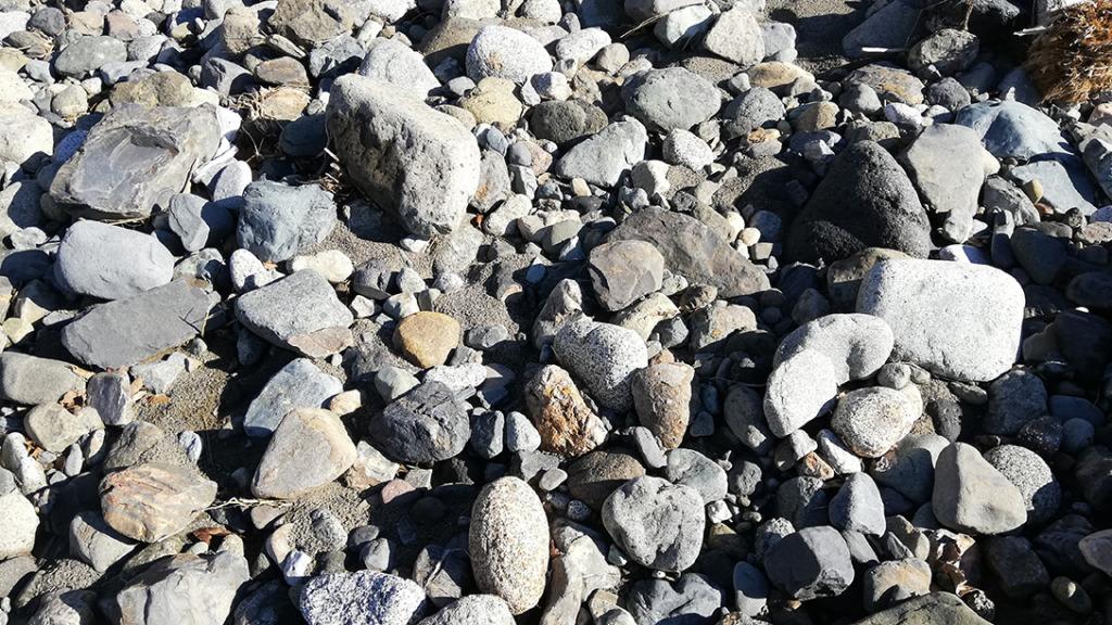 桂川河原の石ころ