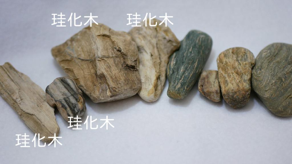 4つの石が珪化木であることを改めて確認