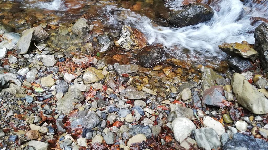平井川上流の流れ